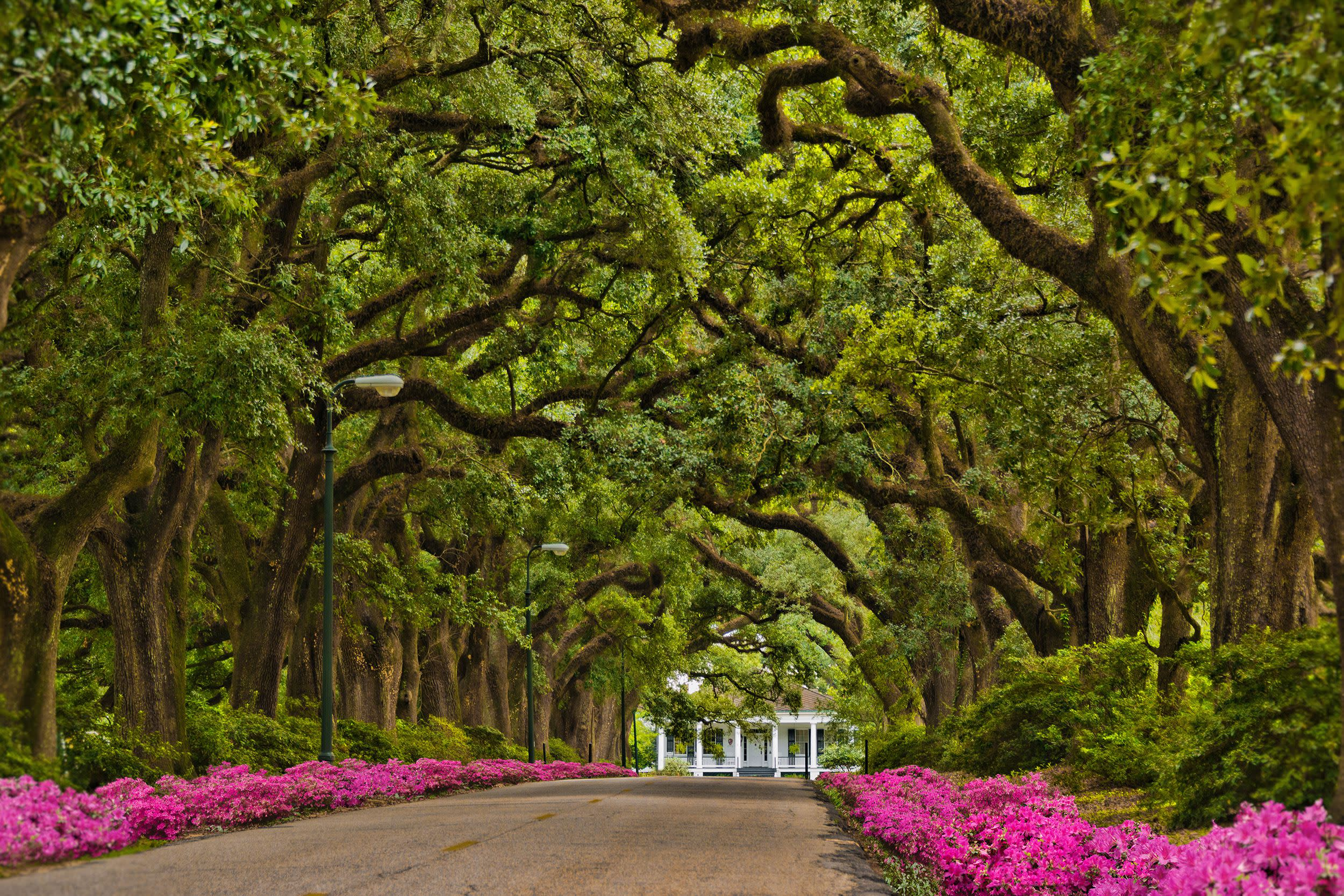 Avenue of Oaks - Spring Hill College