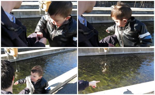 Feeding the fish at the NYS Fish Hatchery