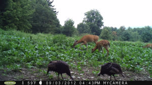 Wildlife Outdoor Enterprises