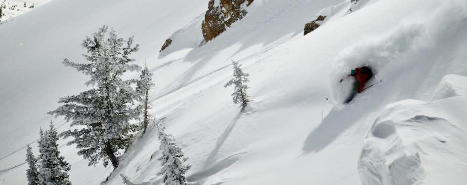 Powder Skiing Alta - Andrew Strain