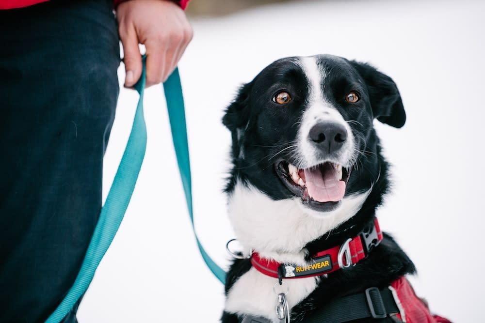 Patrol Dogs - ZoZo