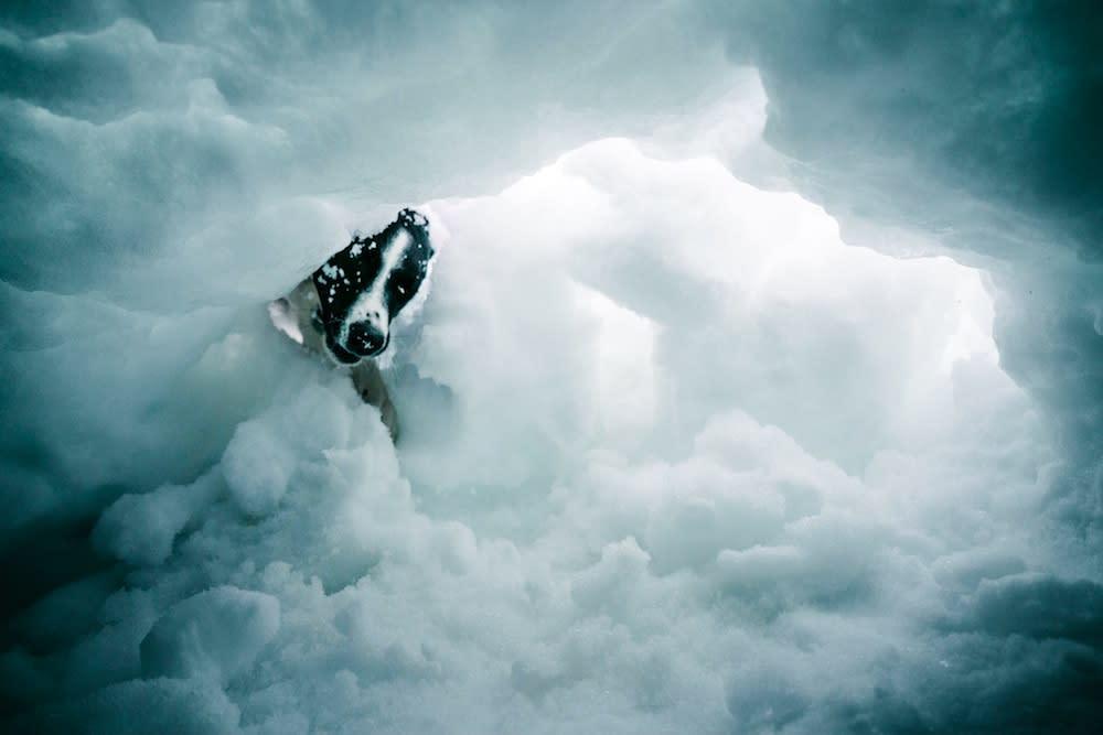 Patrol Dog - Snow Cave