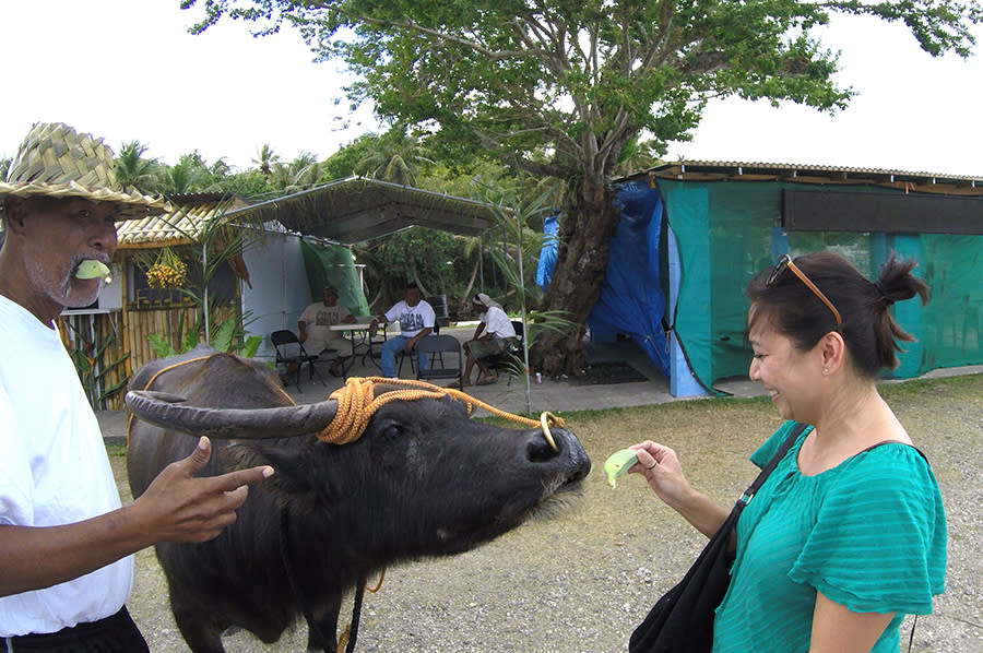 Feeding Carabao