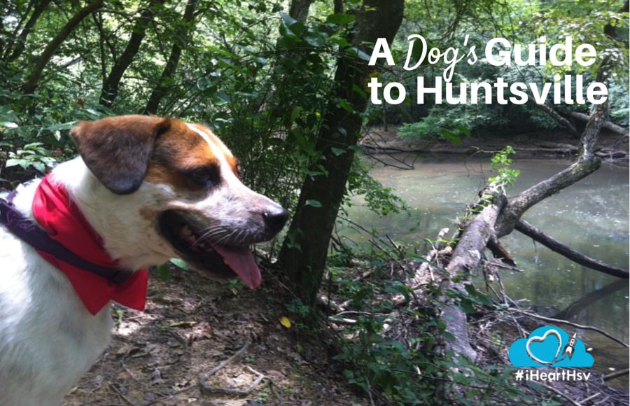 A Dog's Guide to Huntsville, Alabama via iHeartHsv.com