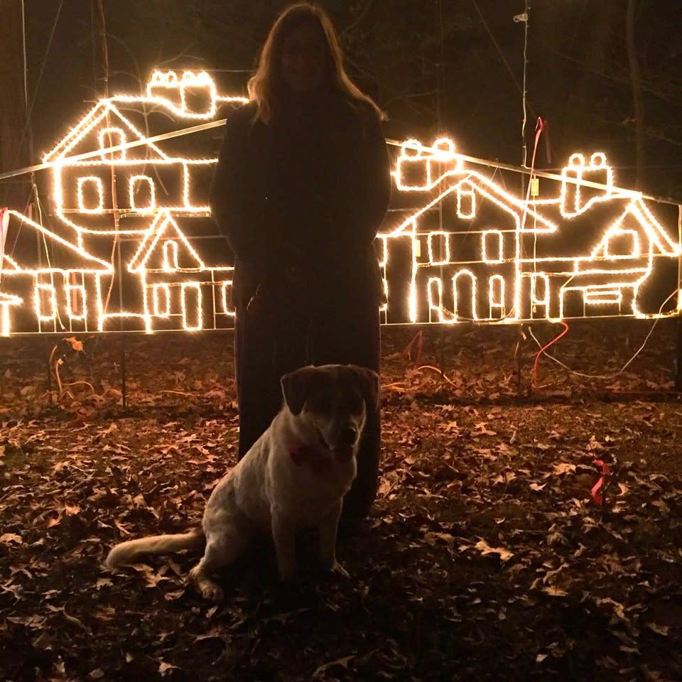 Dog Walking Nights Galaxy of Lights