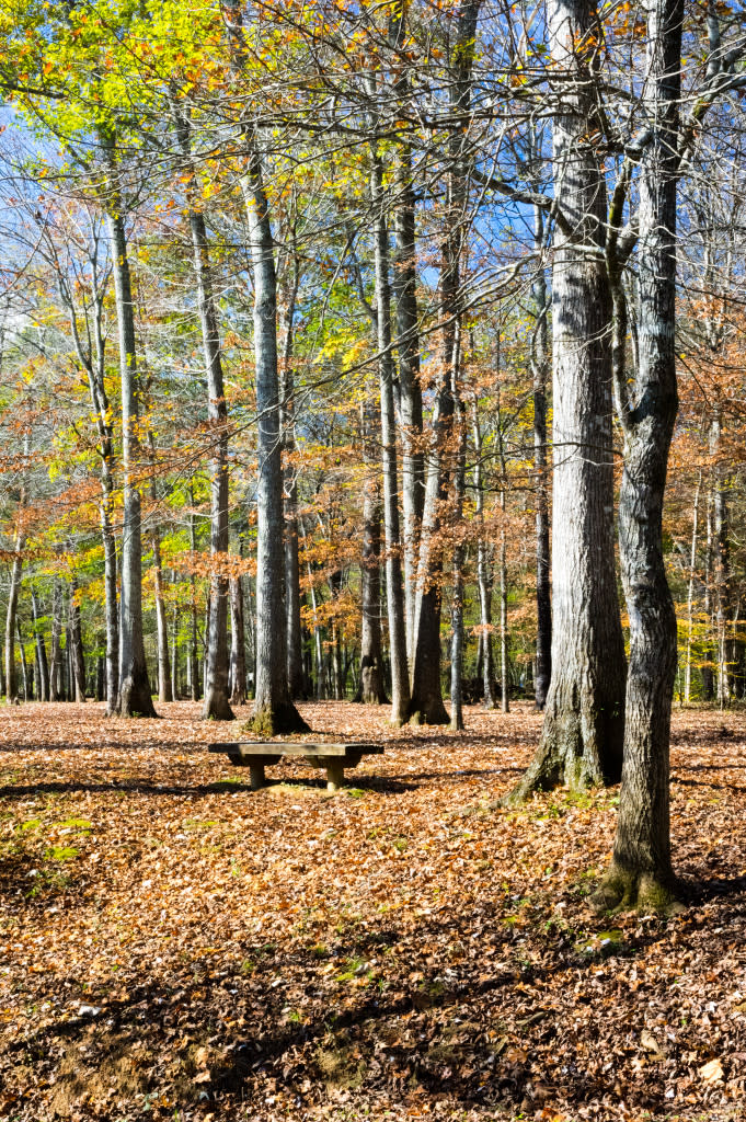 Get your winter hike on at Hays Nature Preserve via iHeartHsv.com