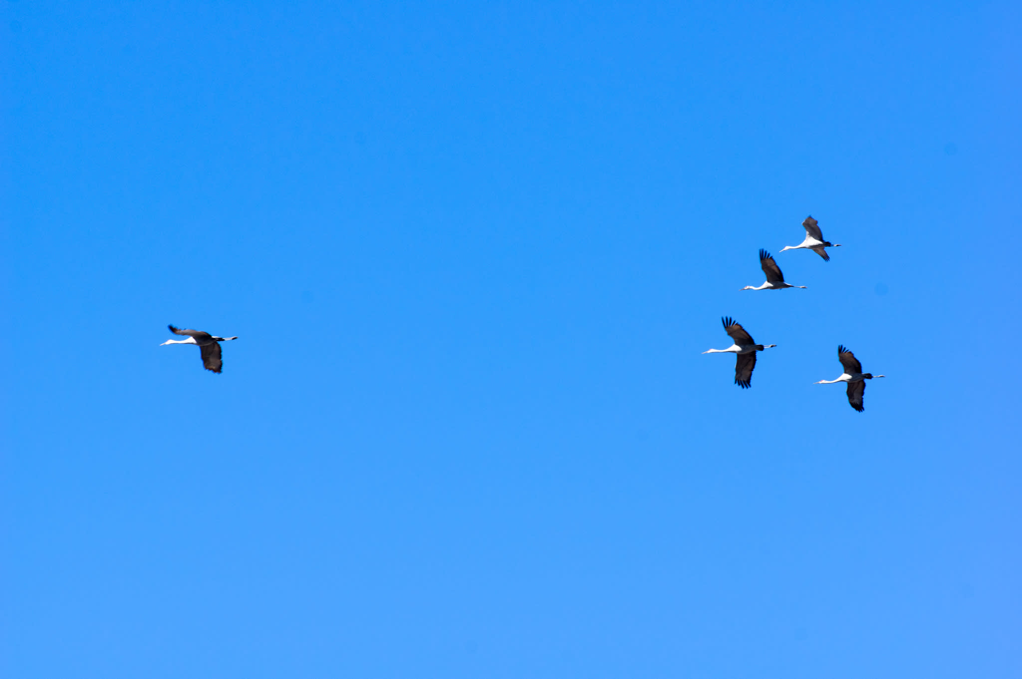 Birding in Huntsville & Madison County