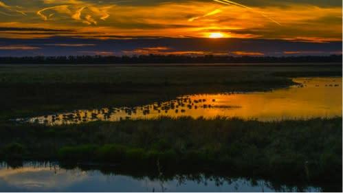 Shiawassee National Wildlife Refuge Wildlife Drive