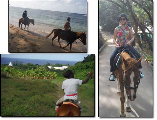 Barbados Horse