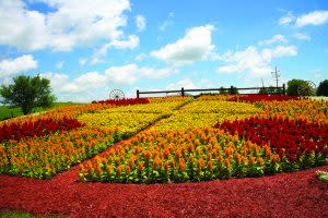 Quilt Gardens in full bloom -- usually late June to July -- are a sight to behold.