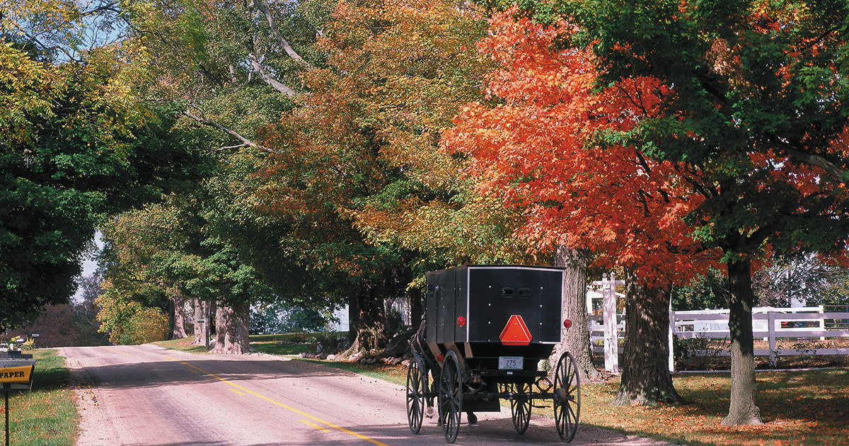 An Amish buggy is being pulled down a street in Elkhart County lined with trees with leaves changing to red and orange for fall.