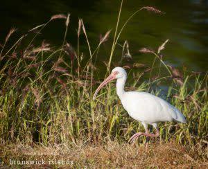 26dsc_0645-ibis