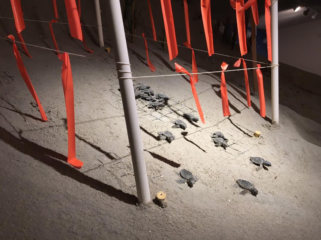sea turtle exhibit