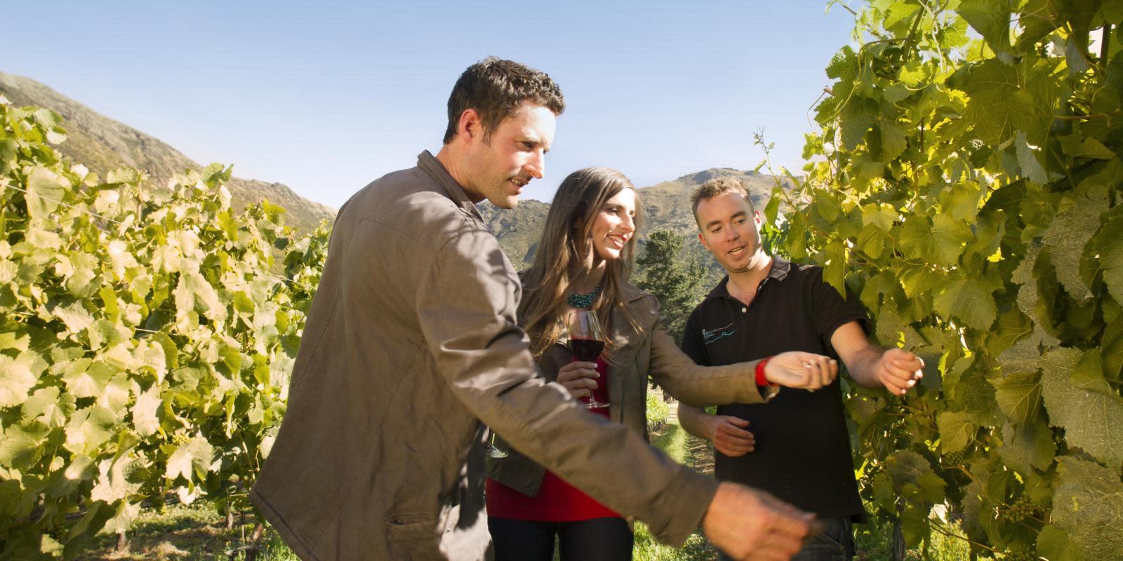Honeymoon picnic wine romance