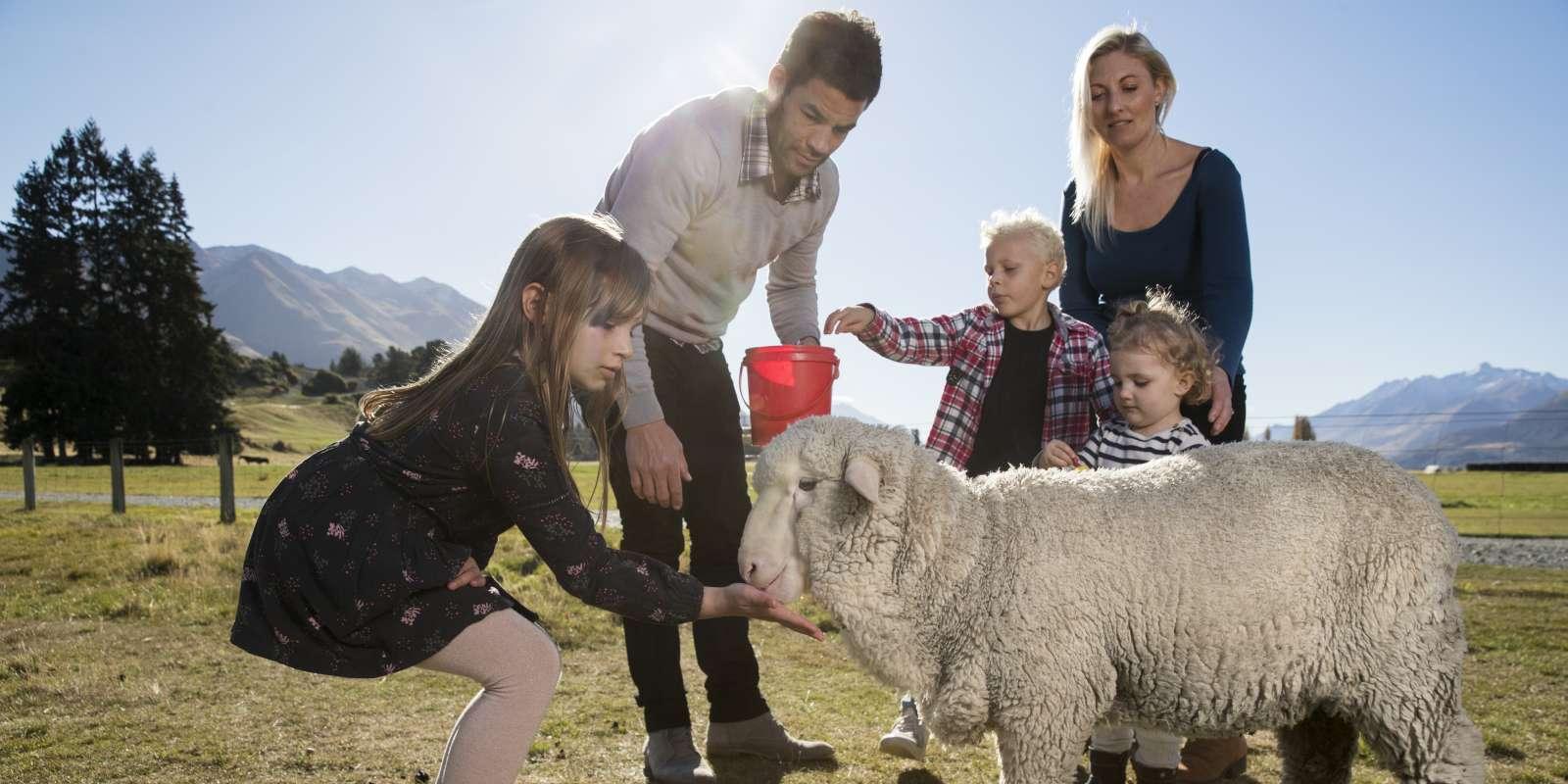 Mt Nicholas Farm Experience Family Feeding Sheep