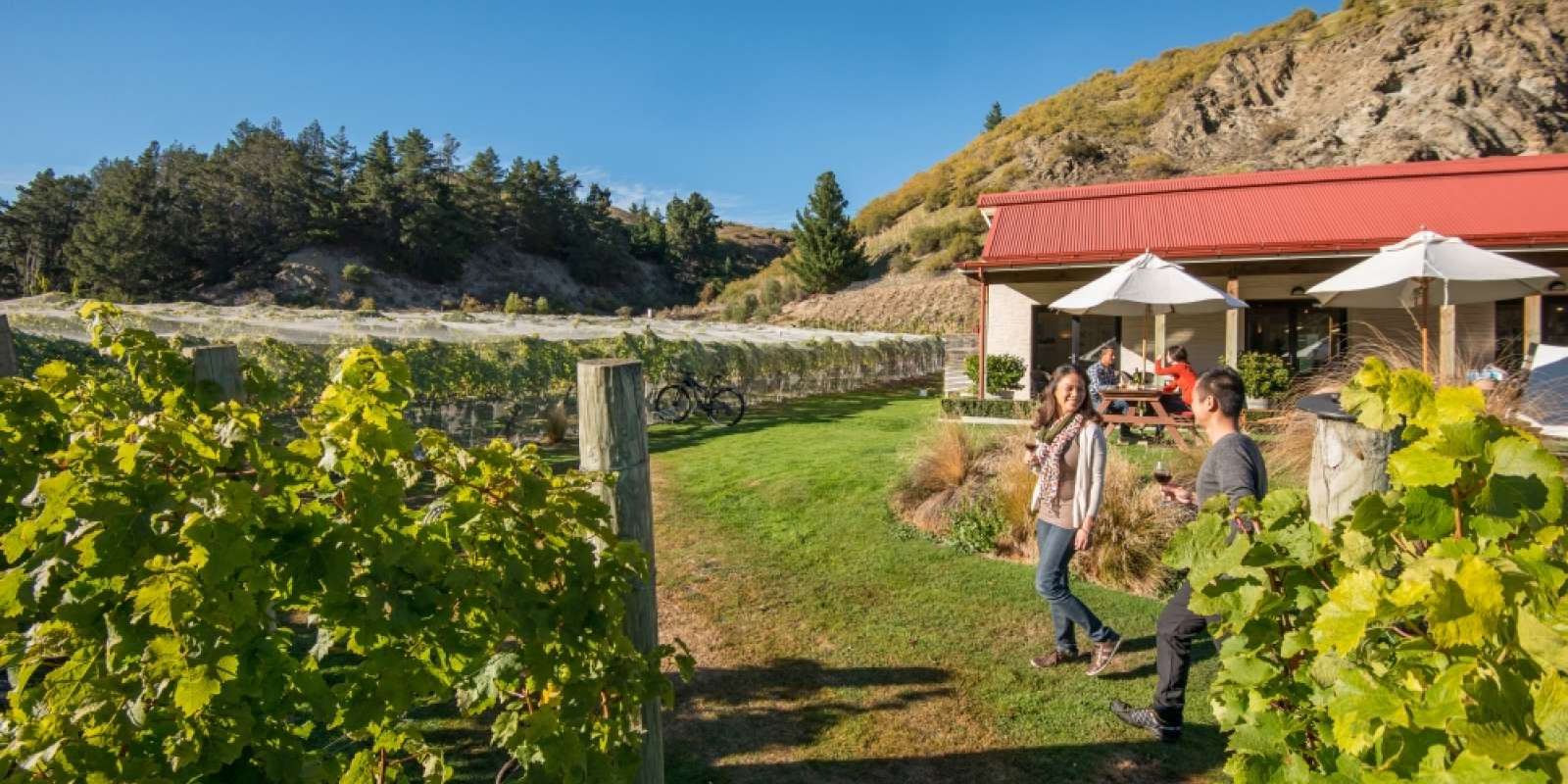 Visit a winery in Gibbston Valley