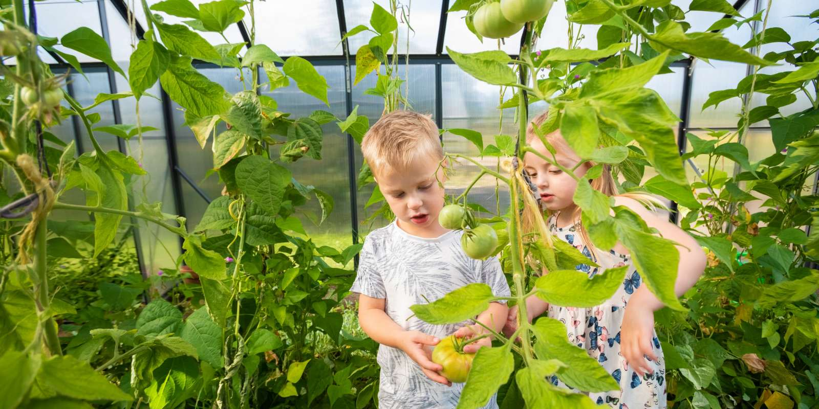 Children looking at tomatoes on the vine in Millbrook's Green House