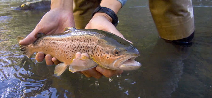 Fishing - Bryce Canyon Area of Utah