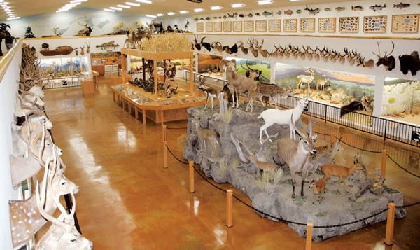 Bryce Canyon Wildlife Museum and Adventures