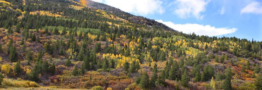 Fall colors in Bryce Canyon Utah
