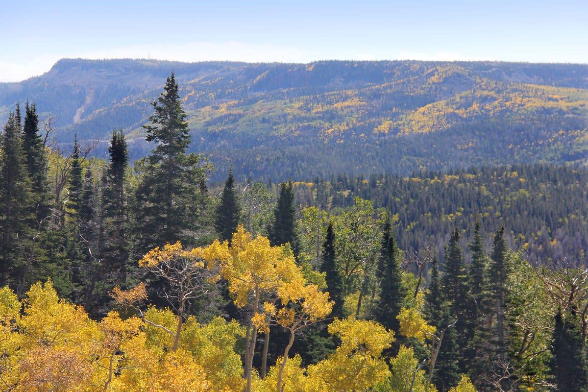 Fall colors on Utah's Boulder Mountain