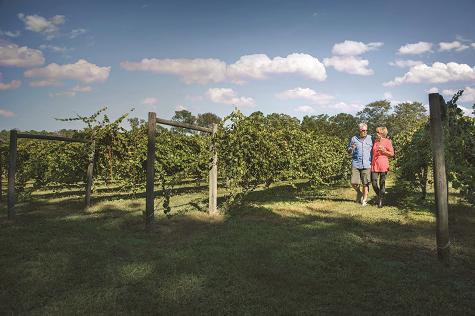 duplin winery north myrtle beach