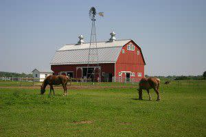 The Farm at Prophetstown- Horses Grazing