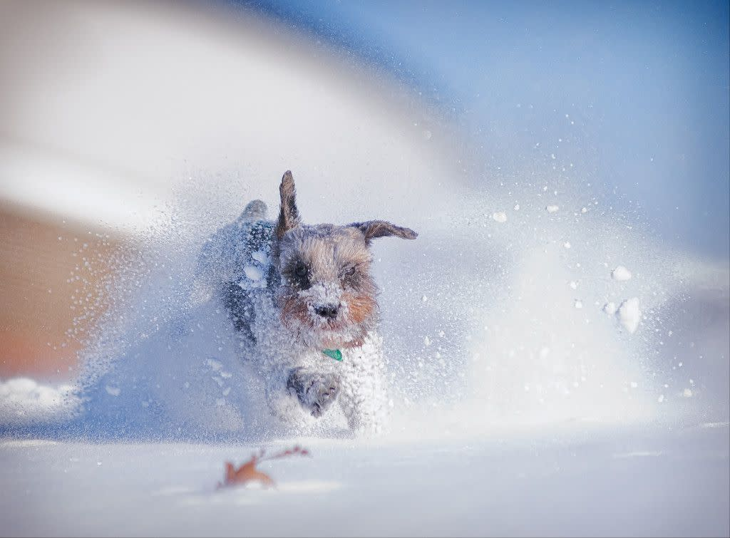 Puppy in Snow Li