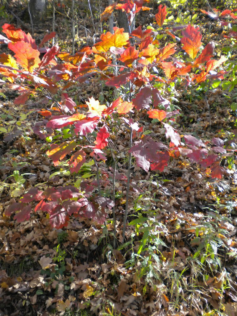 Bright reds, orange and yellow leaves!