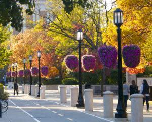 campus-baskets-walk-2014