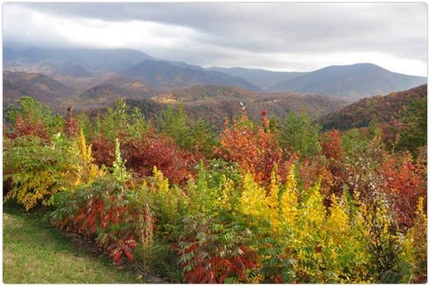 fall colors Gatlinburg TN