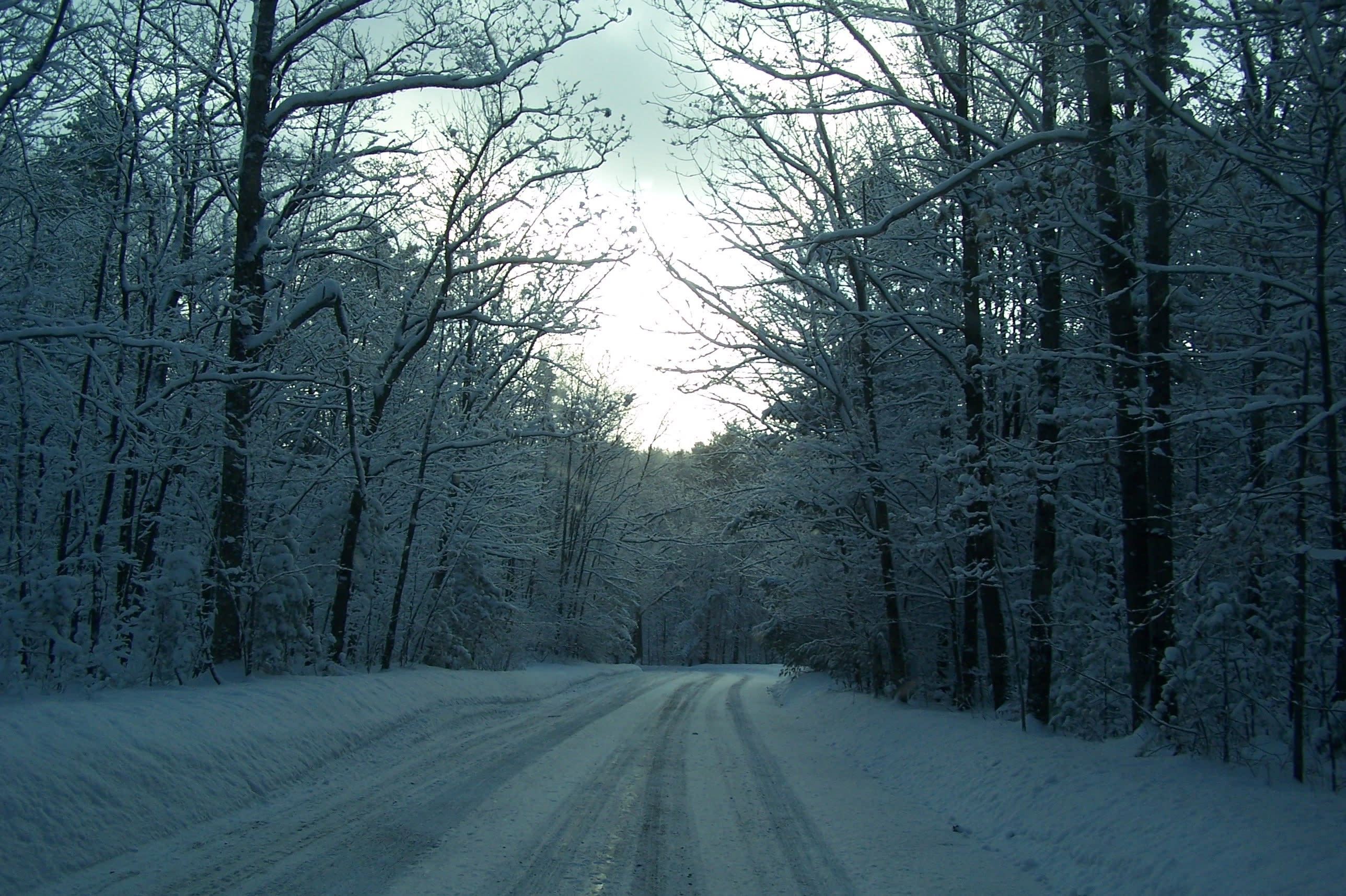 A tranquil drive through the Finger Lakes National Forest
