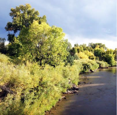 Trees glow as the river waters flow along the Low Road from Taos.