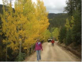 Santa Fe Walkabouts will drive you up by Pinzgauer, but you'll want to slow down for a walk in leafy beauty.