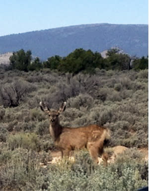 Sometimes the Santa Fe wildlife is just as curious about us as we are about them.
