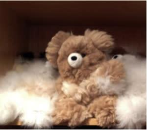 … and the teddy bears are alpaca too!