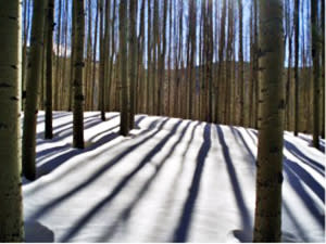 Aspen trees take on a new vertical look as they cast long shows on a mountainside. (Photo courtesy of Outspire)