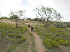 Pets get off-leash and on the run at the Frank Ortiz Dog Park. (Photo Credit: Bring Fido)
