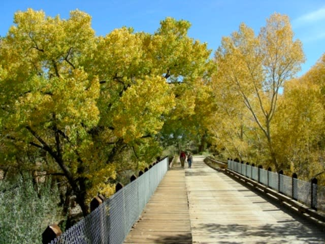 Bring your camera to catch the cottonwoods basking in a golden glow along the Galisteo Creek. (Courtesy of Inn on the Alameda)