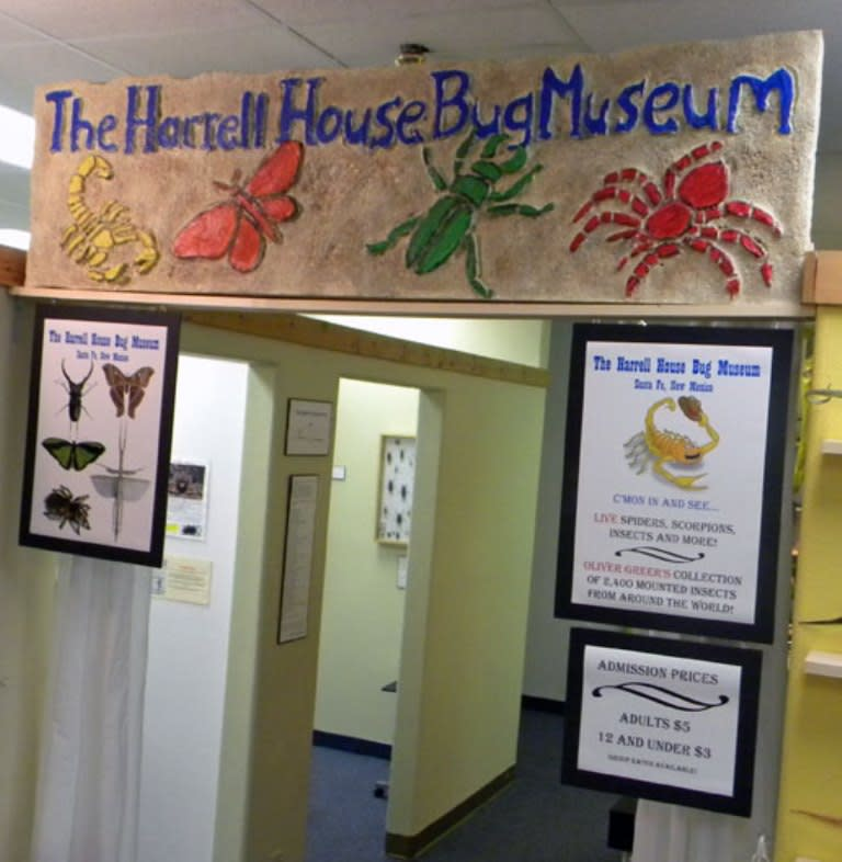 Be sure to take the little ones to see the awesome collection of bugs and natural oddities at the Harrell House. (Photo courtesy of Harrell House Bug Museum)