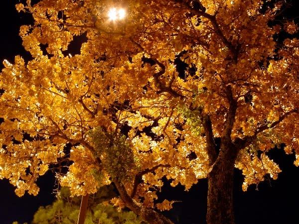 night-tree by Kyle Caldwell