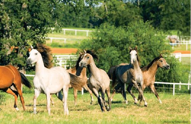 HorseCountry2