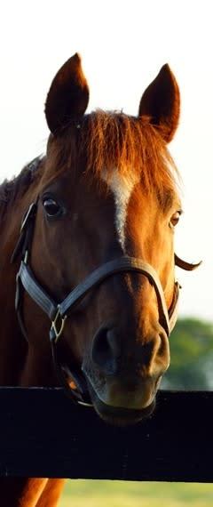 North Texas Horse Country Tours, Denton