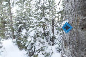 Snowshoe trail arrow happy jack recreation area