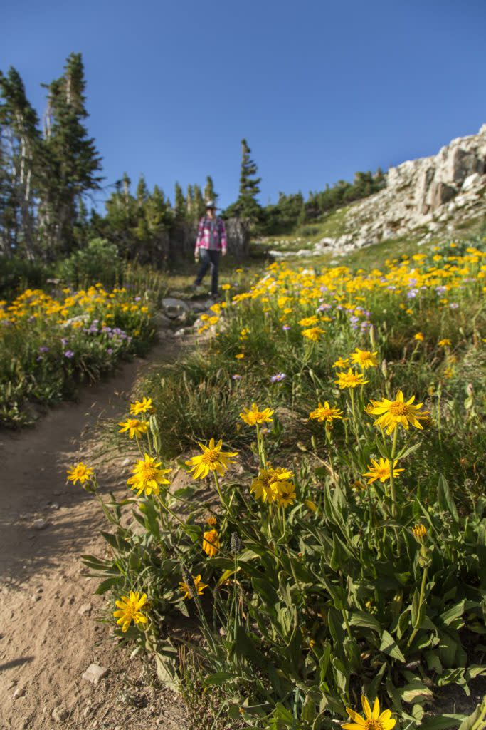 Laramie Medicine Bow National Forest Hiking Flowers Summit