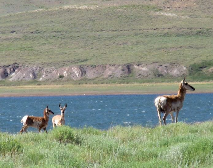Wyoming wildlife can be seen during your social distancing road trip