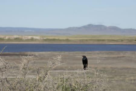 Birds Hutton Lake National Wildlife Refuge