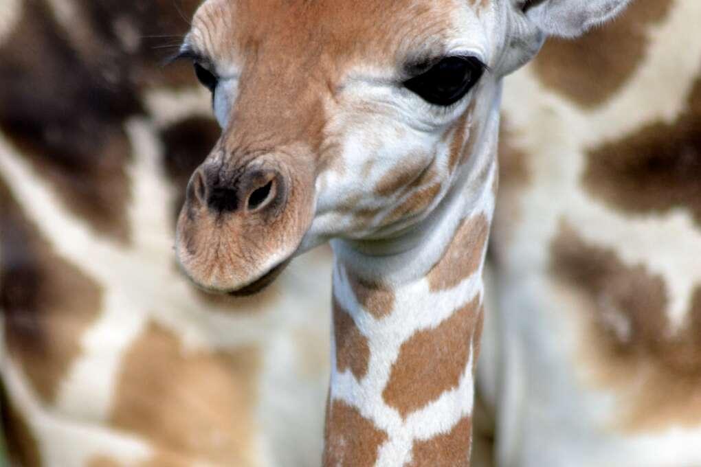 Baby Hakuna at Lion Country Safari