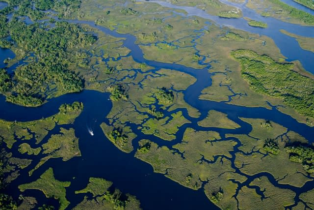 An aerial view of the swamp at the Withlacoochee