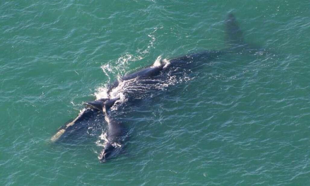 Flagler Beach whale